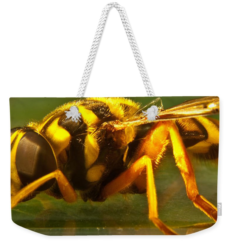 Syrphid Weekender Tote Bag featuring the photograph Gold Syrphid Fly by Douglas Barnett