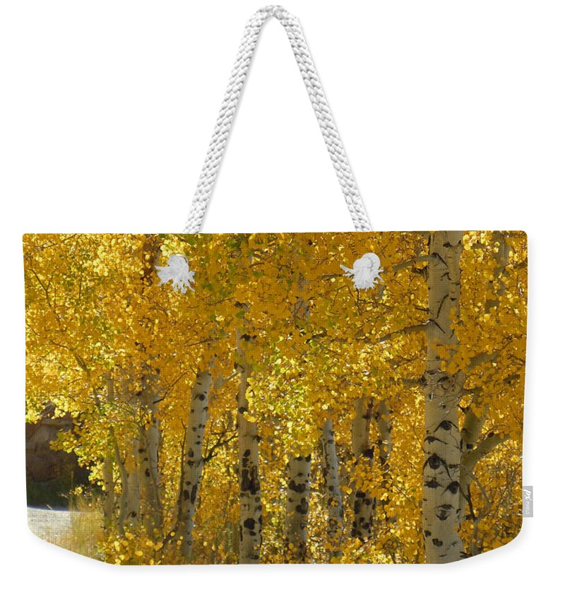 Aspen Weekender Tote Bag featuring the photograph Golden Aspen by Heather Coen