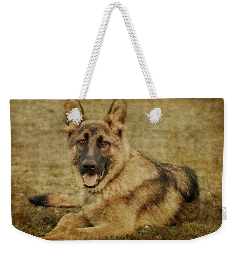 Dog Weekender Tote Bag featuring the photograph Golden Boy by Sandy Keeton