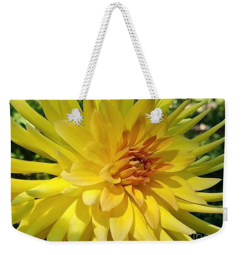 Dahlias Weekender Tote Bag featuring the photograph Golden Dahlia Beauty by Jane Powell
