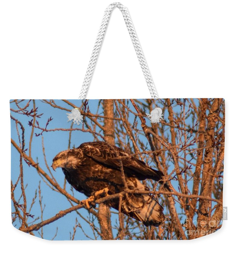 Golden Eagle Weekender Tote Bag featuring the photograph Golden Eagle Liftoff by William Tasker