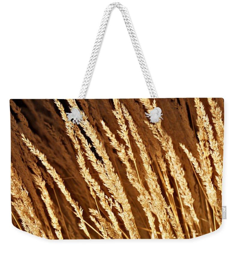 Grass Weekender Tote Bag featuring the photograph Golden Grass by Douglas Barnard