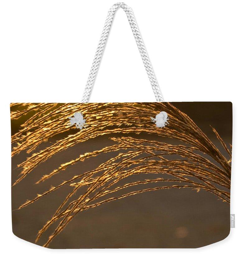 Grass Weekender Tote Bag featuring the photograph Golden Grass by Douglas Barnett