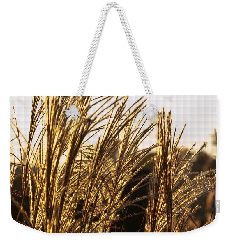 Golden Weekender Tote Bag featuring the photograph Golden Grass Flowers by Douglas Barnett