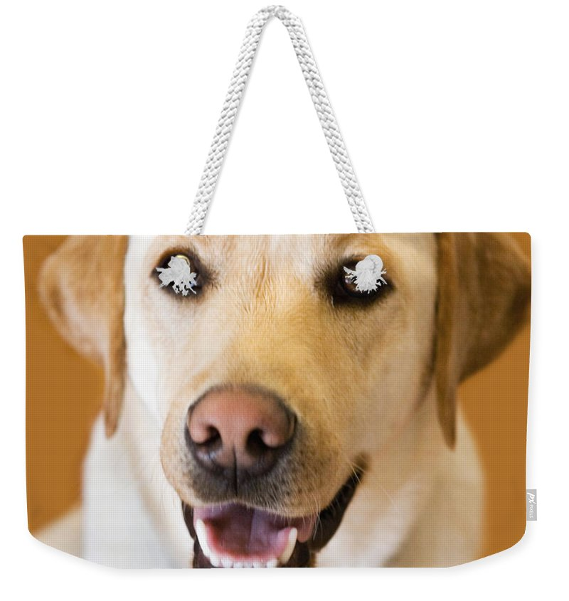 Lab Weekender Tote Bag featuring the photograph Golden Lab by Marilyn Hunt