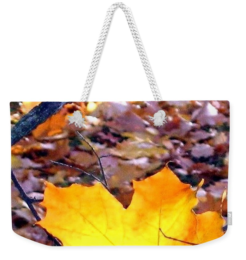 Maple Leaf Weekender Tote Bag featuring the photograph Golden Leaf by Will Borden