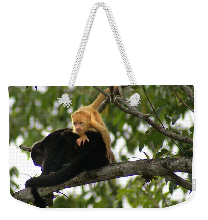 Monkey Weekender Tote Bag featuring the photograph Golden Monkey by Heather Coen
