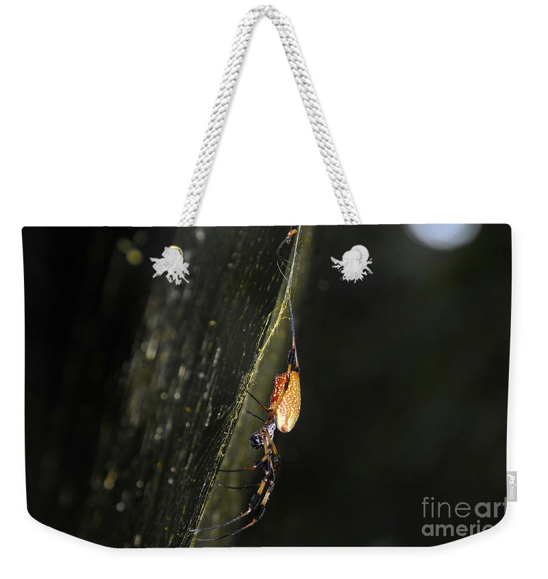 Golden Orb Spider Weekender Tote Bag featuring the photograph Golden Orb Spider by David Lee Thompson