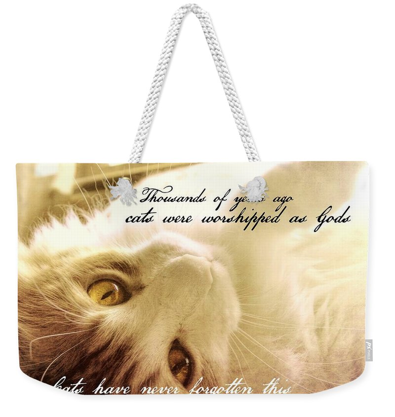 Cat Weekender Tote Bag featuring the photograph Golden Quote by JAMART Photography