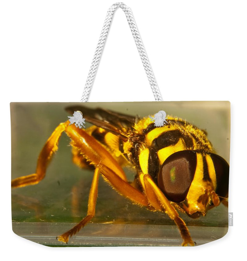 Syrphid Weekender Tote Bag featuring the photograph Golden Syrphid by Douglas Barnett