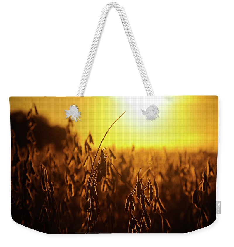 Landscape Weekender Tote Bag featuring the photograph Golden by Todd Aarnes