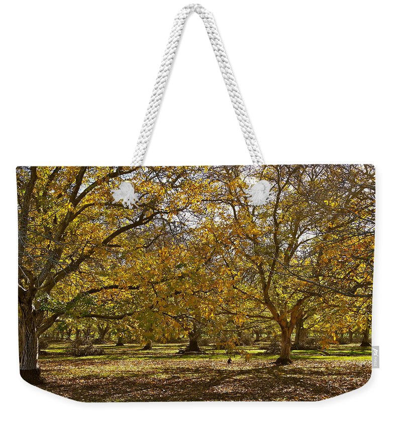 Walnut Trees Weekender Tote Bag featuring the photograph Golden Walnut Orchard II by Michele Myers