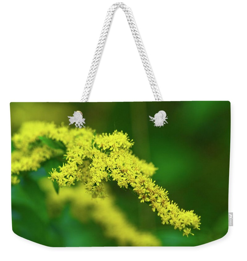 Goldenrod Weekender Tote Bag featuring the photograph Goldenrod by Paul Mangold