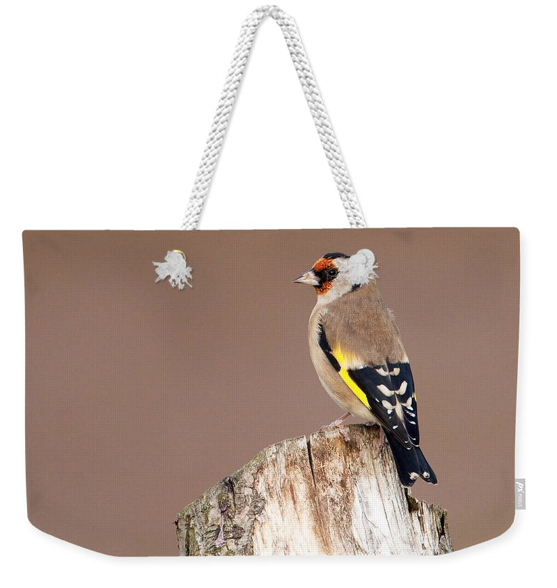 Goldfinch Weekender Tote Bag featuring the photograph Goldfinch by Bob Kemp