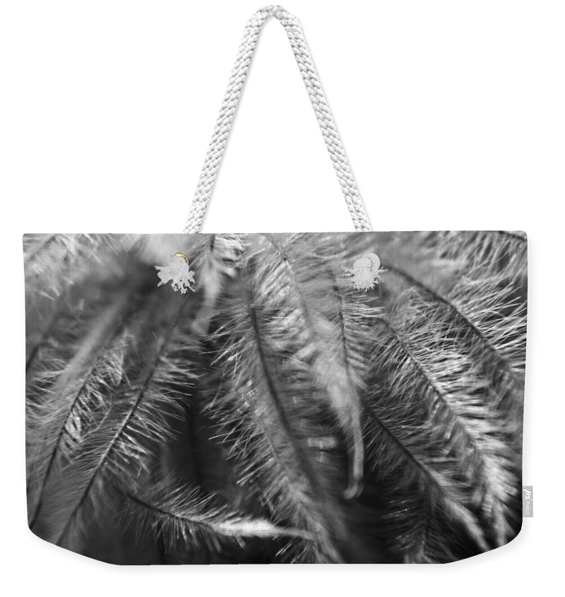 Clematis Weekender Tote Bag featuring the photograph Gone To Seed Clematis by Teresa Mucha