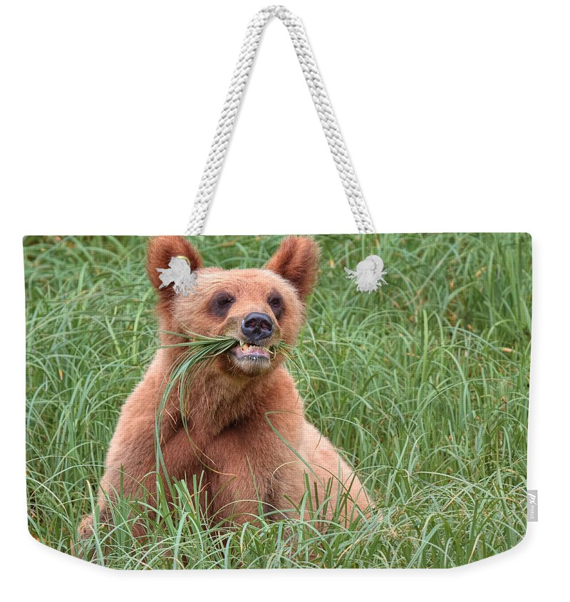 Khutzymateen Grizzly Bear Sanctuary Weekender Tote Bag featuring the photograph Good Stuff by James Anderson