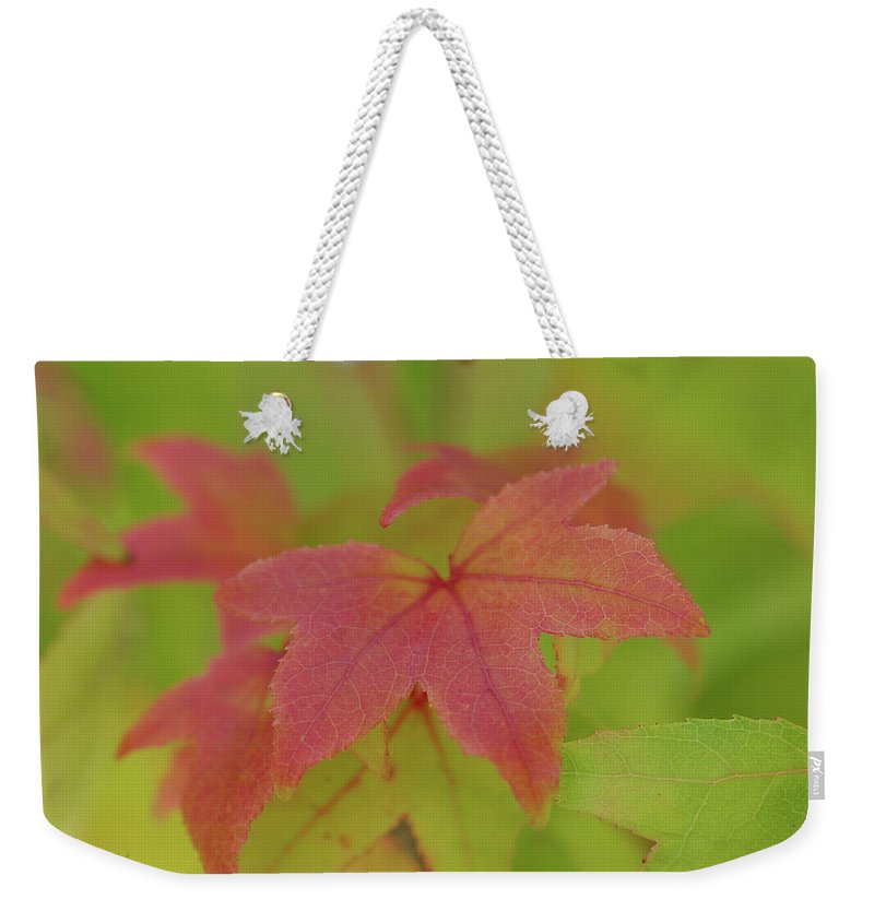 Leaves Weekender Tote Bag featuring the photograph Goodbye Green by Donna Blackhall