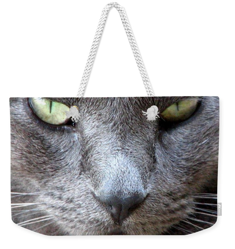 Cat Weekender Tote Bag featuring the photograph Goody by J M Farris Photography