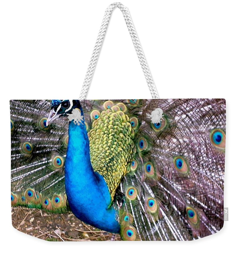 Peacock Weekender Tote Bag featuring the photograph Gorgeous George by Susan Baker