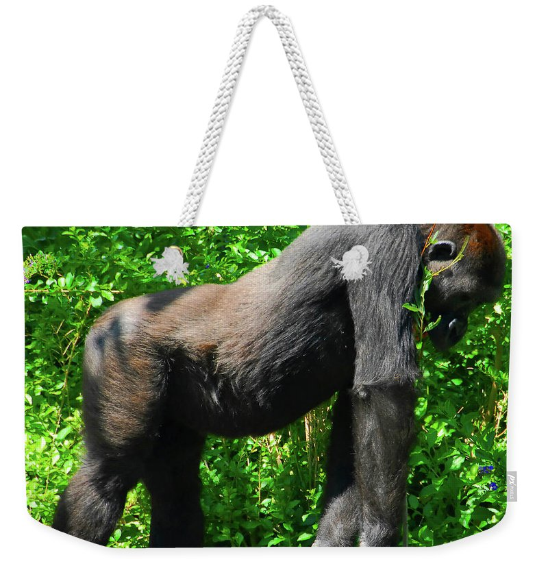 Gorilla Weekender Tote Bag featuring the photograph Gorilla Posing by David Lee Thompson