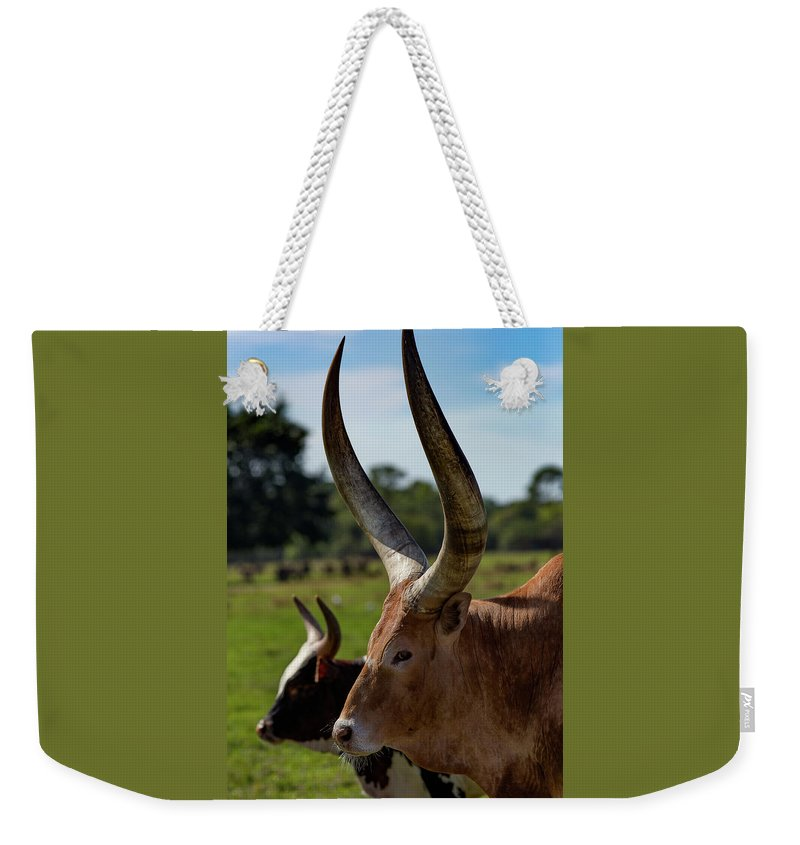 Africa Weekender Tote Bag featuring the mixed media Got My Eye On You by Capt Gerry Hare