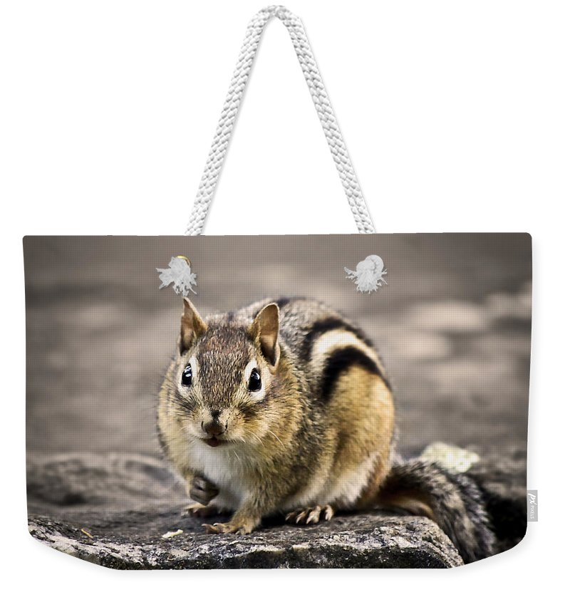 Animal Weekender Tote Bag featuring the photograph Got Nuts by Evelina Kremsdorf