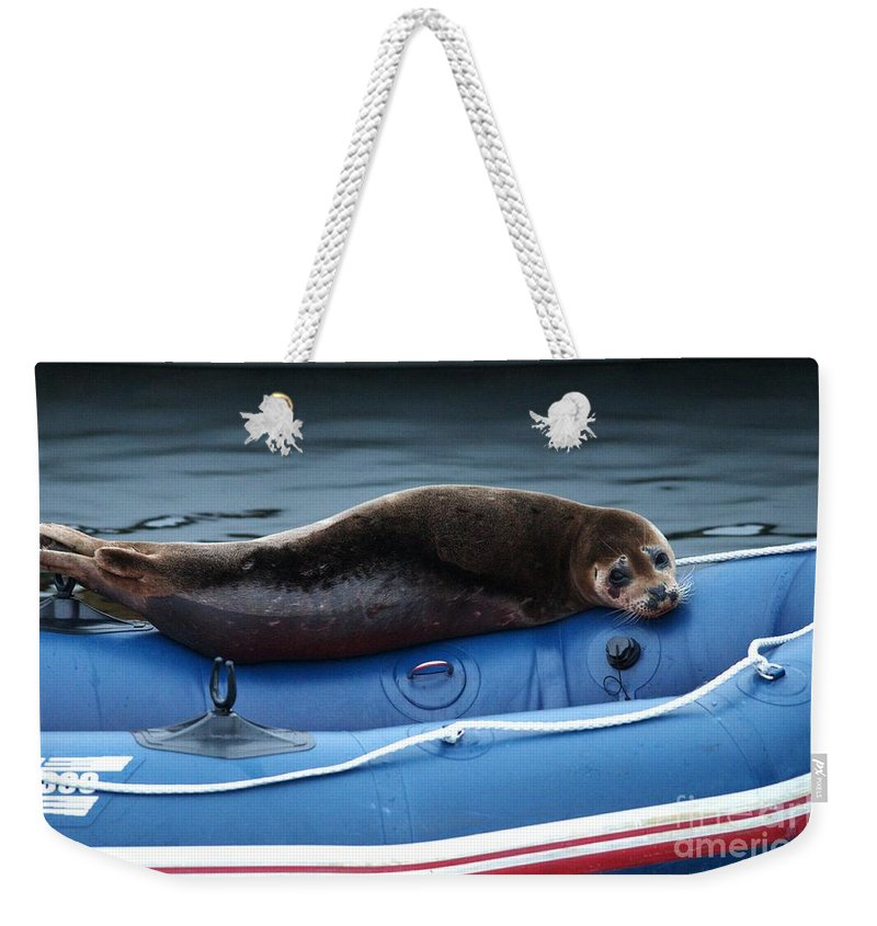 Harbor Seal Weekender Tote Bag featuring the photograph Got Salmon by Sharon Talson