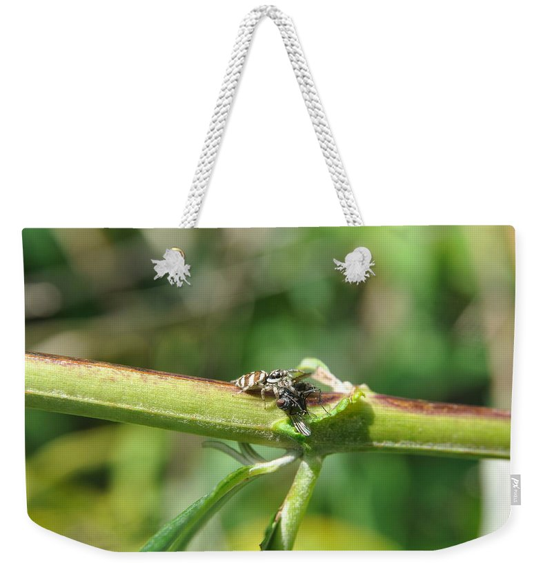 Jumping Spider Weekender Tote Bag featuring the photograph Gotya by Eduard Meinema