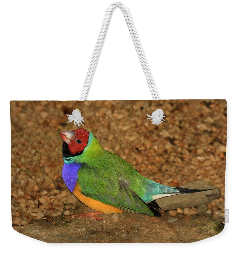 Bird Weekender Tote Bag featuring the photograph Gouldian Finch by John Absher