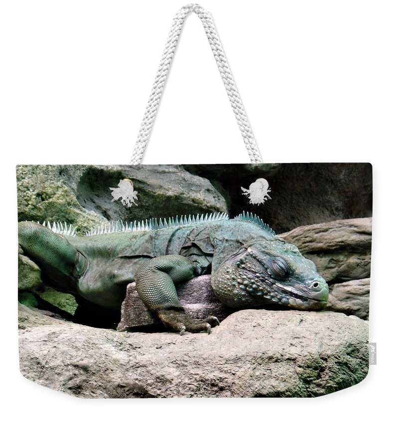 Lizard Weekender Tote Bag featuring the photograph Grand Cayman Blue Iguana by Angelina Tamez