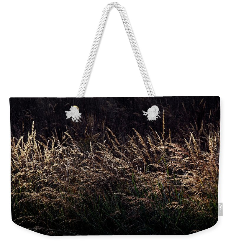 Grass Weekender Tote Bag featuring the photograph Grass At Sunset by Kristen Pearce