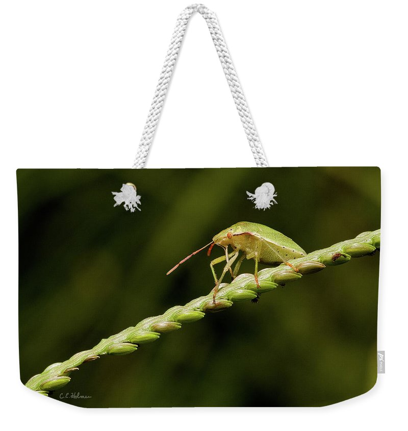 Bug Weekender Tote Bag featuring the photograph Grass Bridge by Christopher Holmes