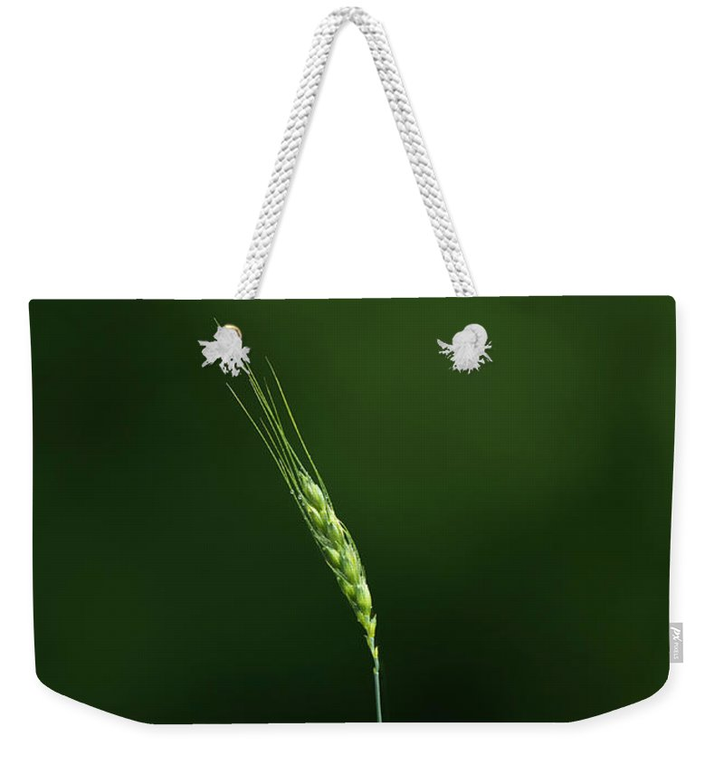 Nature Weekender Tote Bag featuring the photograph Grass by Diane Diederich