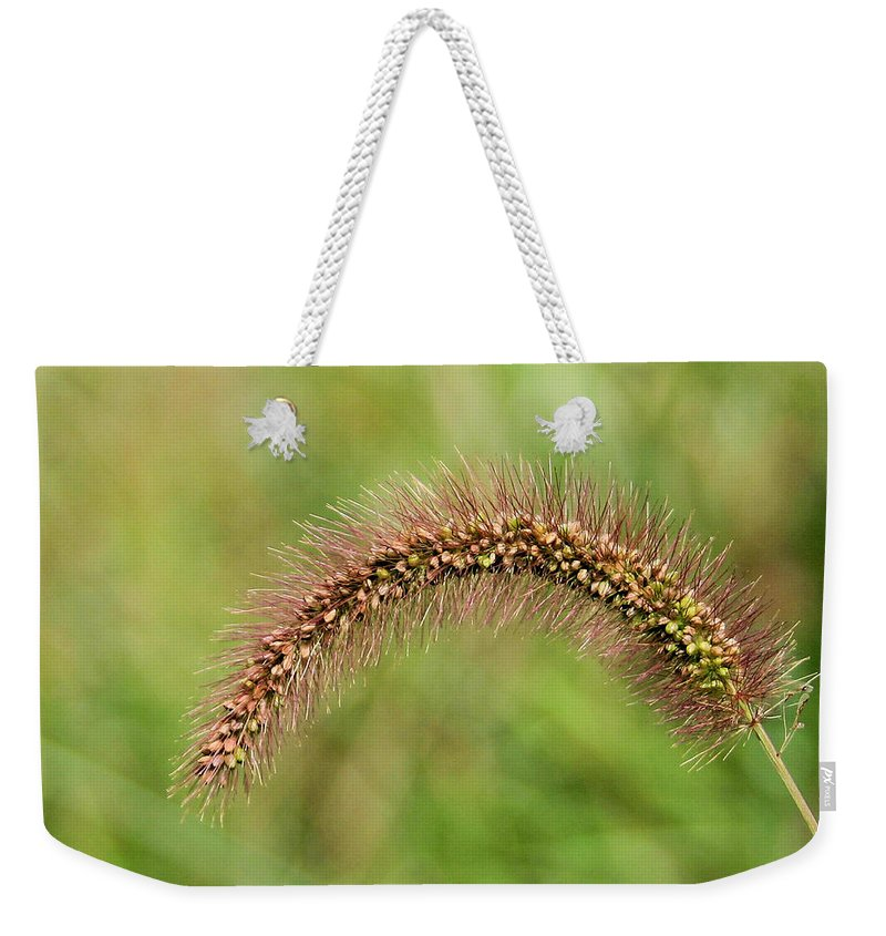 Grass Seed Weekender Tote Bag featuring the photograph Grass Seed by Kristin Elmquist