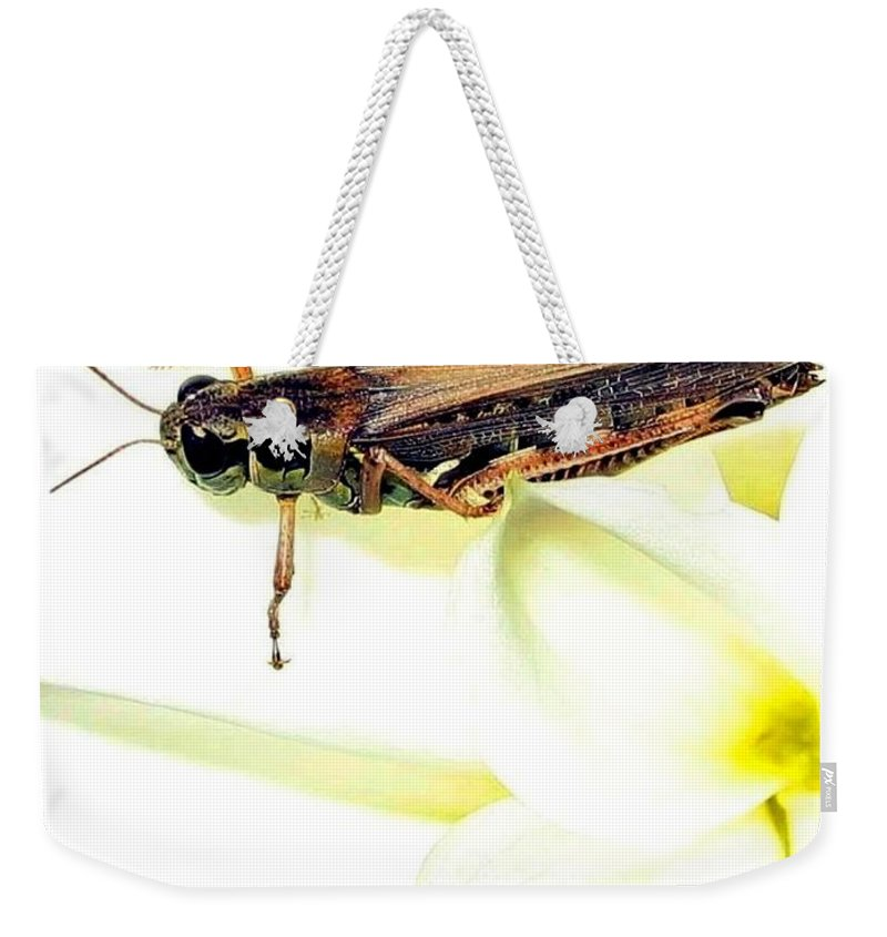 Grasshopper Weekender Tote Bag featuring the photograph Grasshopper by Will Borden