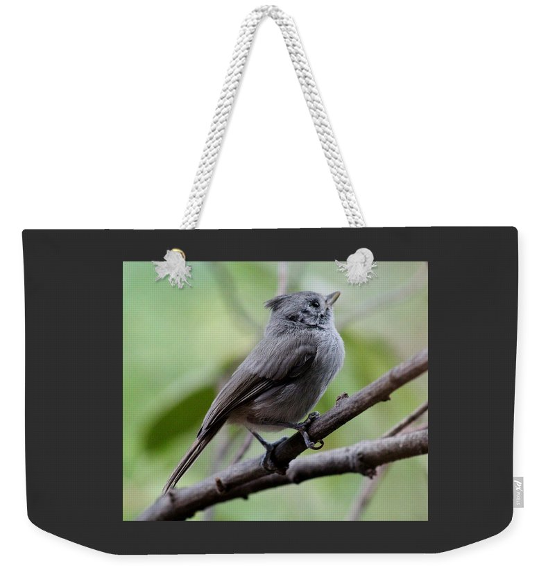 Bird Weekender Tote Bag featuring the photograph Gray Grey Bird 052814aa by Edward Dobosh