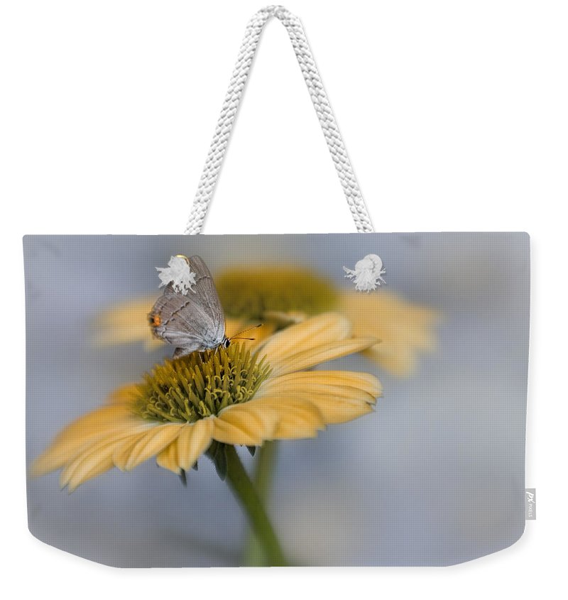 Bloom Weekender Tote Bag featuring the photograph Gray Hairstreak II by David and Carol Kelly