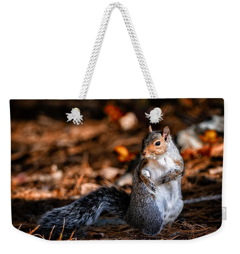 Squirrel Weekender Tote Bag featuring the photograph Gray Squirrel Dance by Bob Orsillo