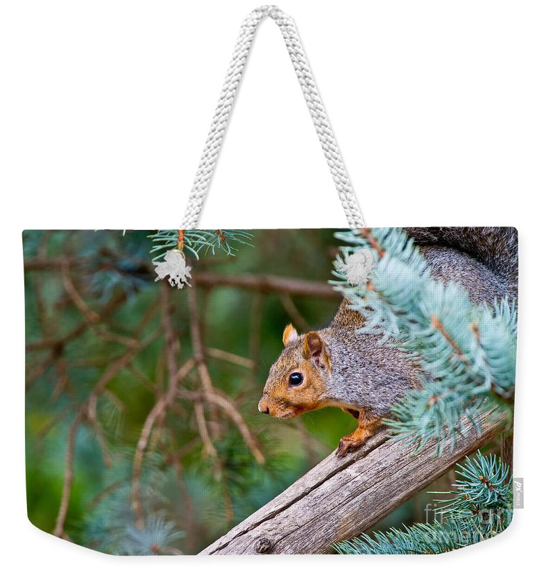 Gray Squirrel Weekender Tote Bag featuring the photograph Gray Squirrel Pictures 93 by World Wildlife Photography