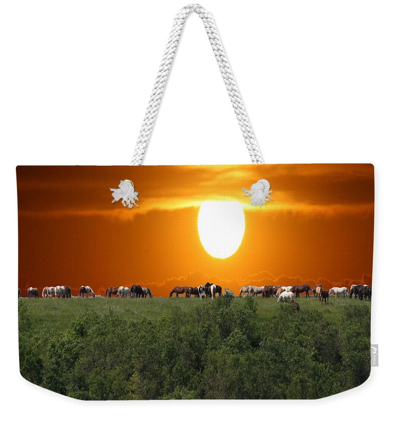 Horses Herd Sunset Grass Trees Nature Animals Scenery Sun Weekender Tote Bag featuring the photograph Grazing by Andrea Lawrence