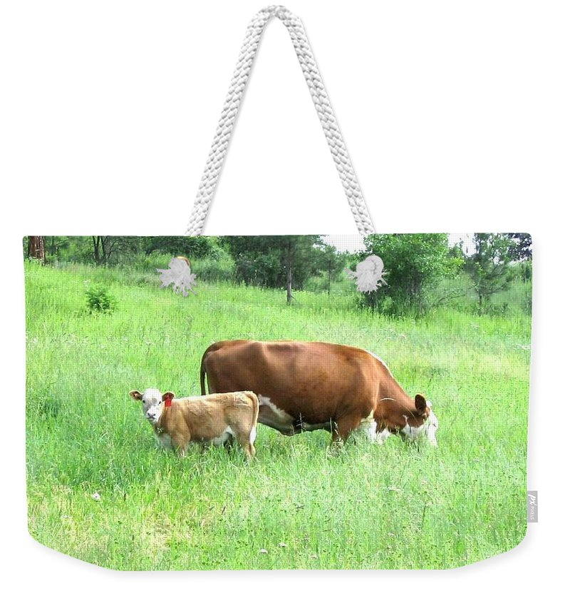 Cow Weekender Tote Bag featuring the photograph Grazing Cow And Calf by Will Borden