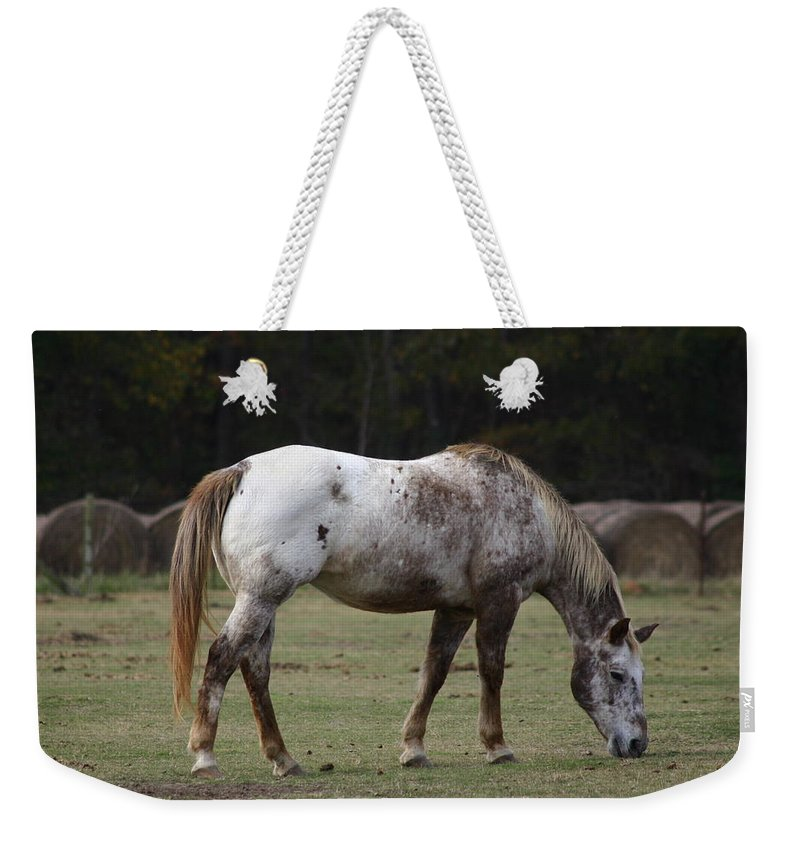 Horse Weekender Tote Bag featuring the photograph Grazing Time by Kim Henderson