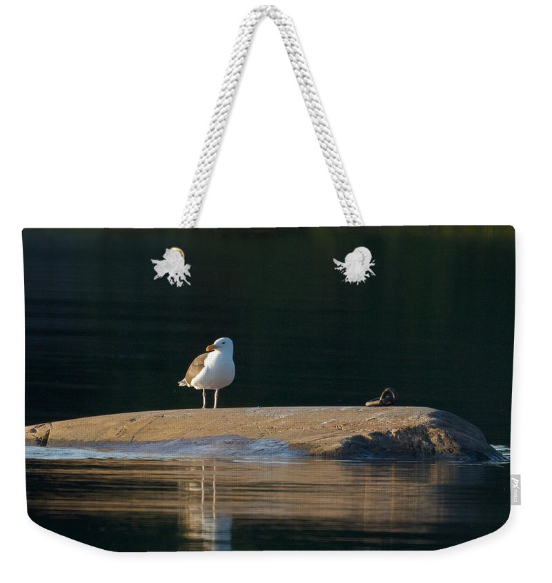 Lehtokukka Weekender Tote Bag featuring the photograph Great Black-backed Gull by Jouko Lehto
