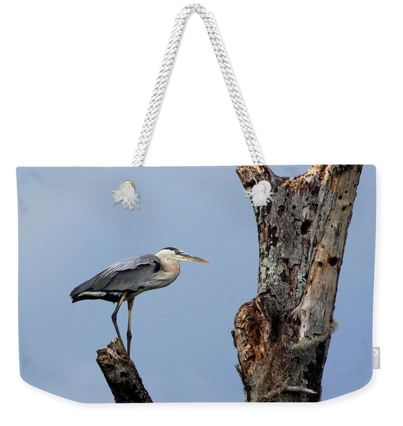 Great Blue Heron Weekender Tote Bag featuring the photograph Great Blue Heron Perched by Barbara Bowen
