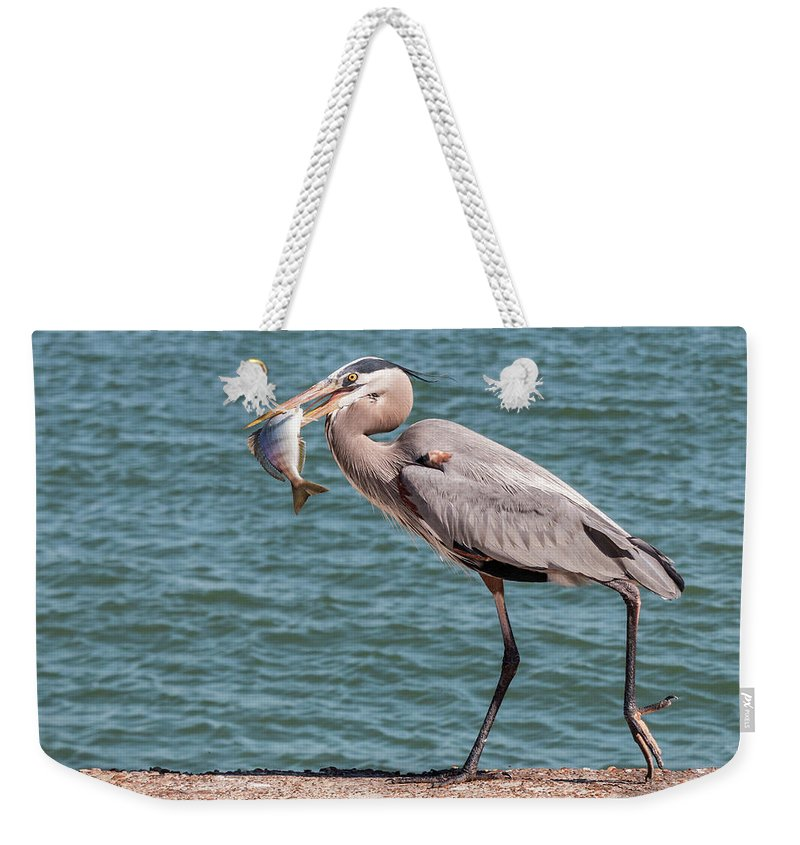 Bird Weekender Tote Bag featuring the photograph Great Blue Heron Walking With Fish #2 by Patti Deters