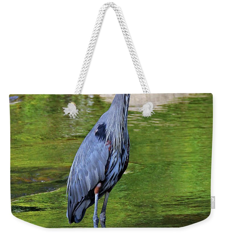 Great Blue Wading The Tuc Weekender Tote Bag featuring the photograph Great Blue Wading The Tuck by Jennifer Robin