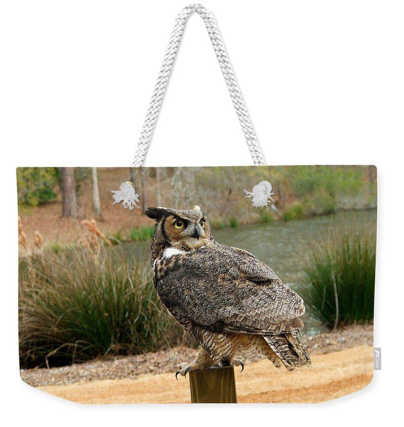 Wildlife Weekender Tote Bag featuring the photograph Great Horned Owl 1 by Robert Meanor