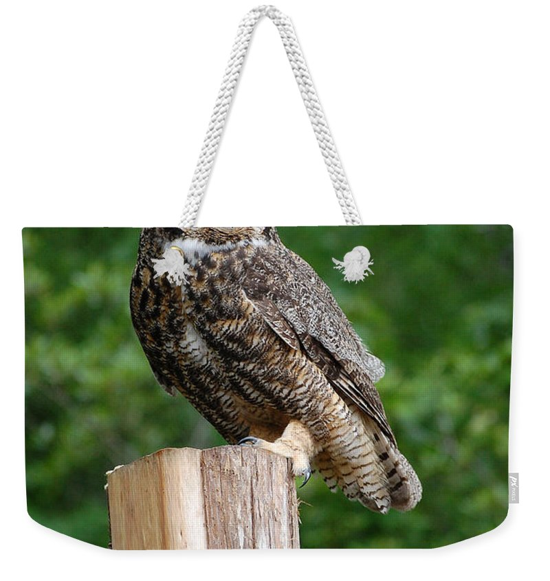 Raptor Weekender Tote Bag featuring the photograph Great Horned Owl by Robert Meanor