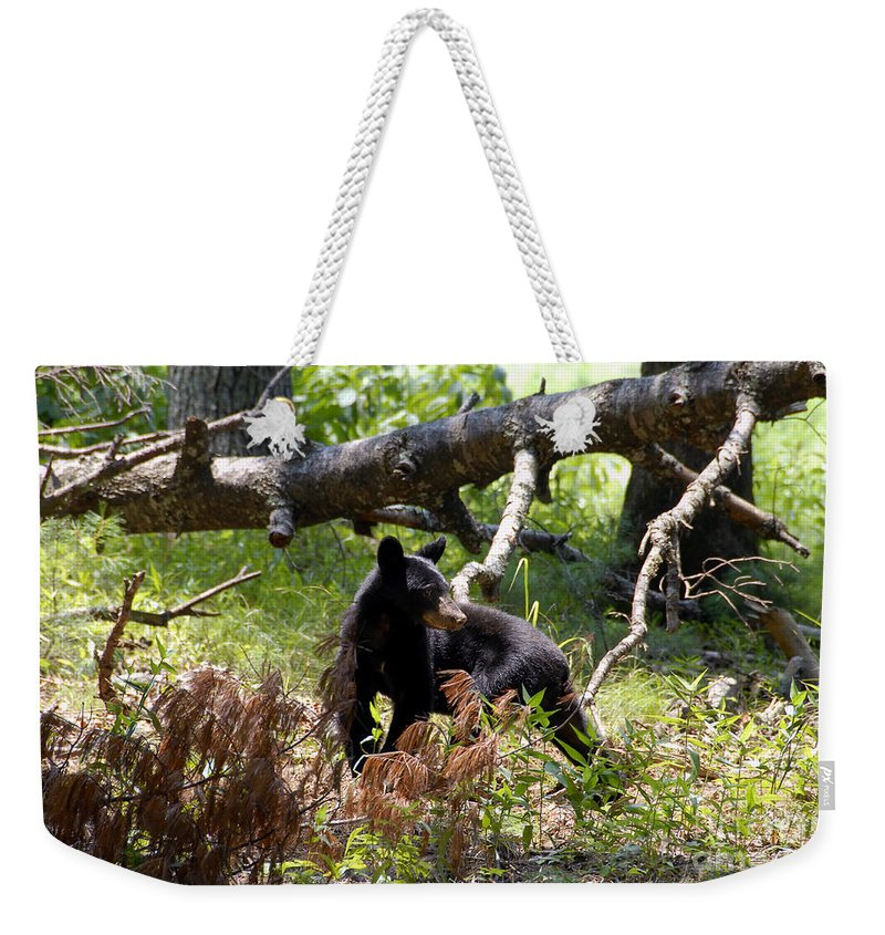 Bear Weekender Tote Bag featuring the photograph Great Smoky Mountain Bear by David Lee Thompson