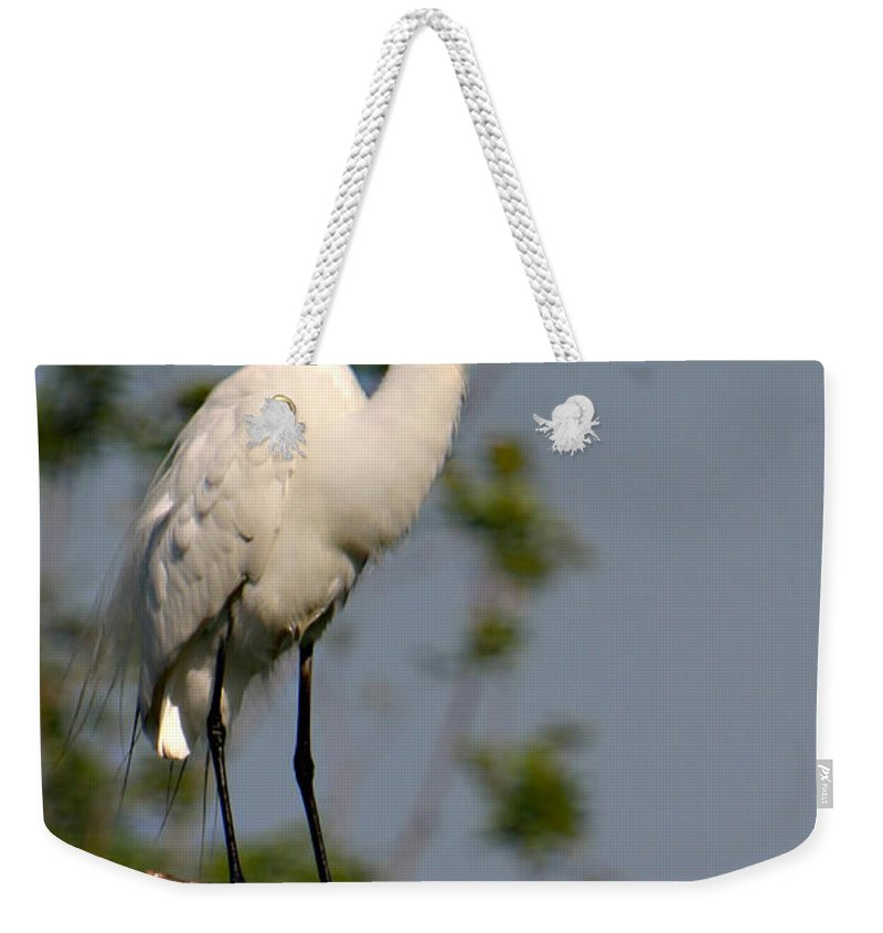 Great White Egret Bird Feathers Flying Florida Sanctuary Wildlife Photograph Photography Weekender Tote Bag featuring the photograph Great White Egret Pose by Shari Jardina